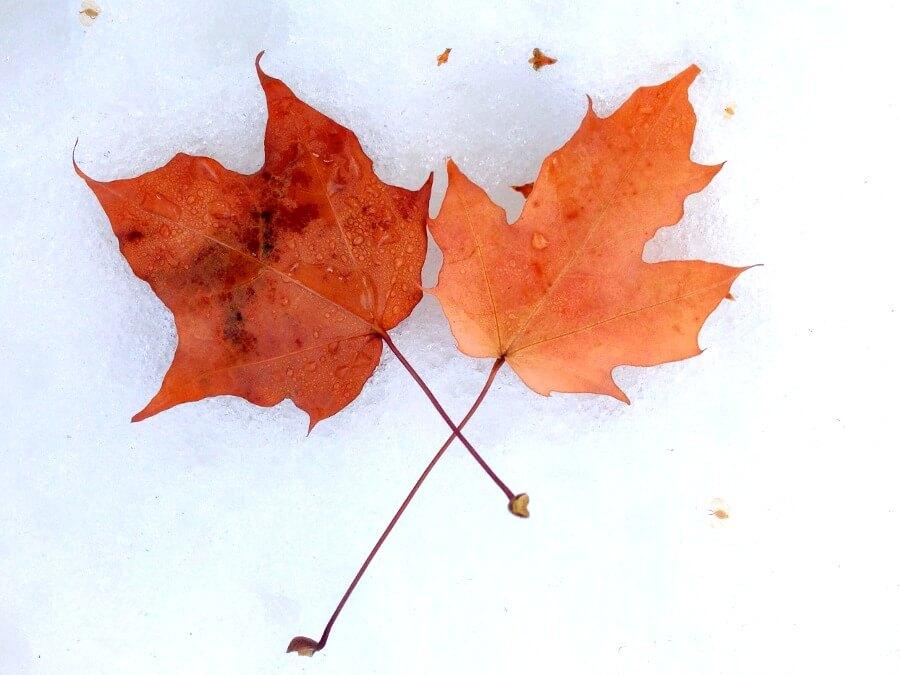 iPad10.2インチロック画面等のシンプルおしゃれな秋の無料壁紙が取り放題