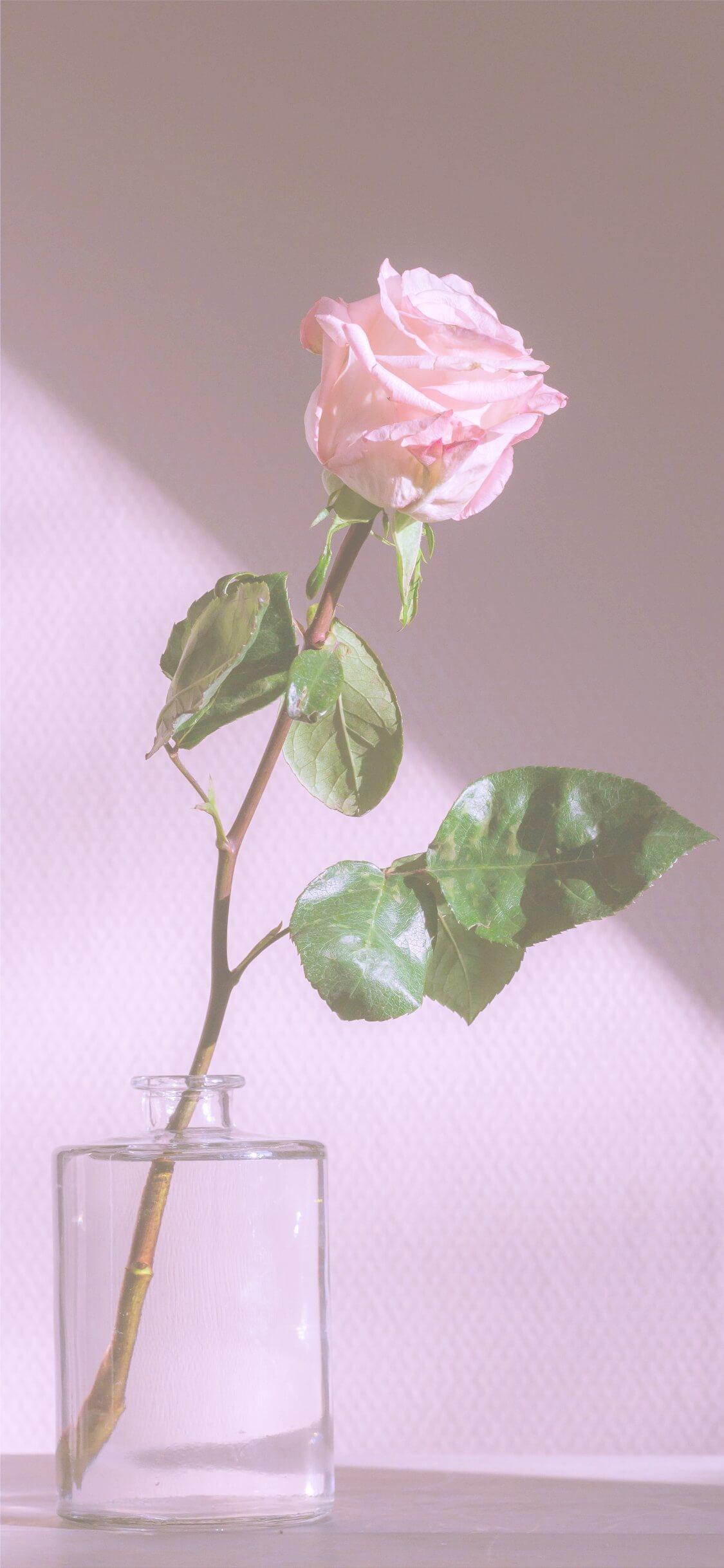 Iphone11pro Iphonexs Xロック画面等シンプルな花の無料壁紙配信中 ページ2