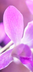 ピンクの花3