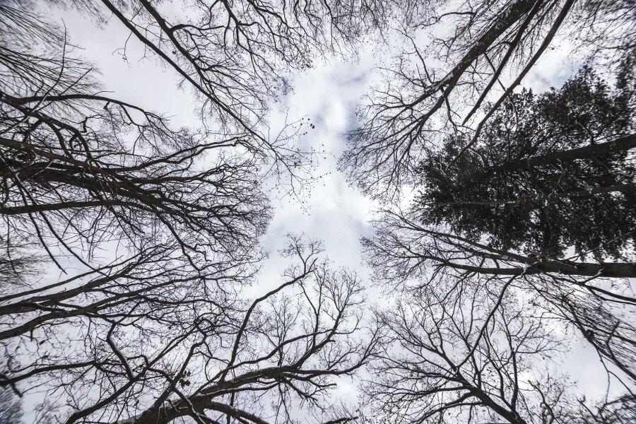 iPad10.2インチの無料壁紙~冬のイメージギャラリー~