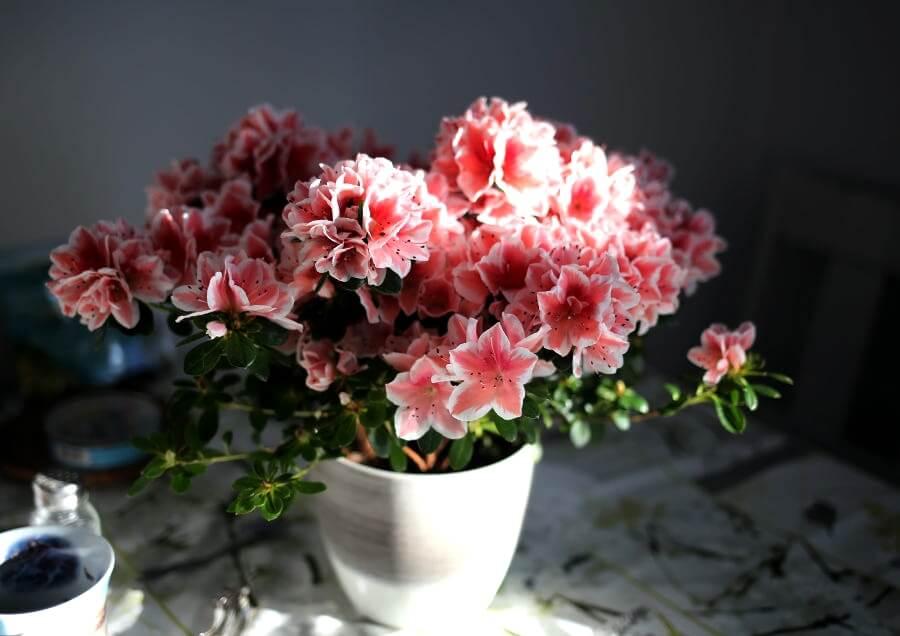 iPhone11ProMax・iPhoneXsMaxの壁紙を花のおしゃれ画像に