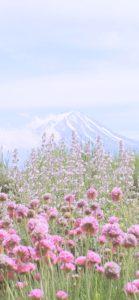 富士山と春の花2