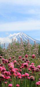 富士山と春の花1