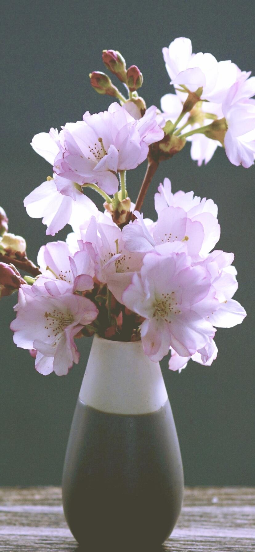 部屋に飾った桜A