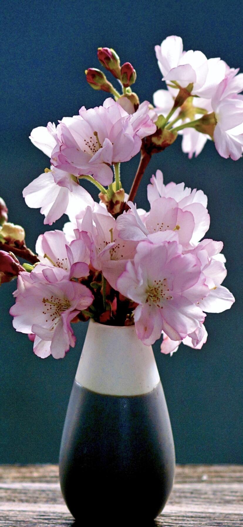 部屋に飾った桜B