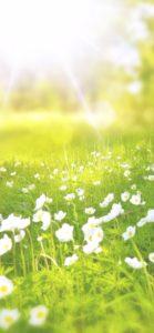 春の日差しと白い花2