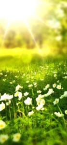 春の日差しと白い花1
