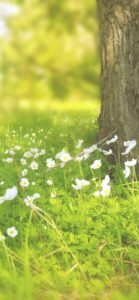 野原の白い花2