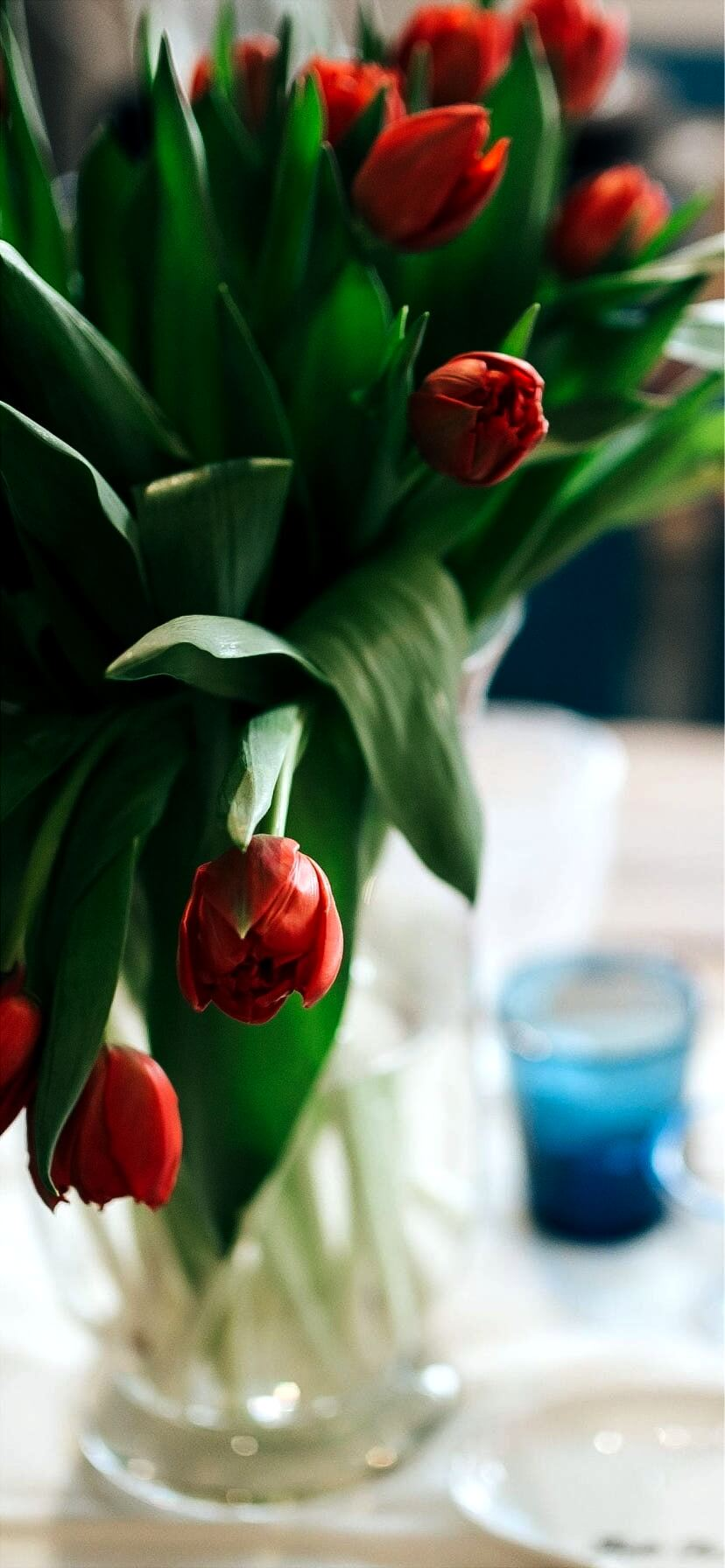 赤いチューリップ1