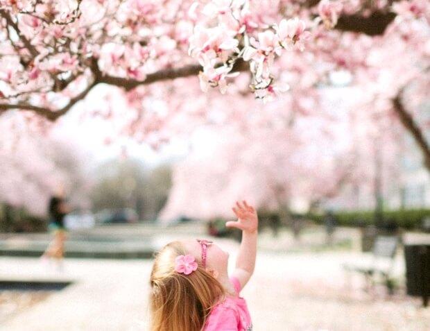 【おすすめ】iPadPro12.9インチのおしゃれな春の壁紙配信中