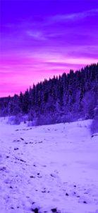 紫色の森と空1
