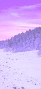 紫色の森と空2