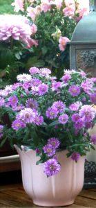 紫色の花のプランター1