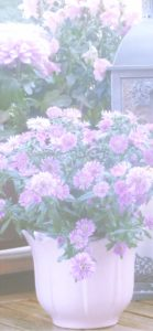 紫色の花のプランター2