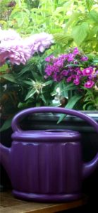 紫色の花とじょうろ1