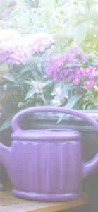 紫色の花とじょうろ2