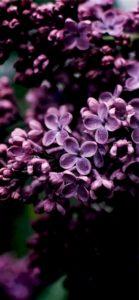 紫色の花1