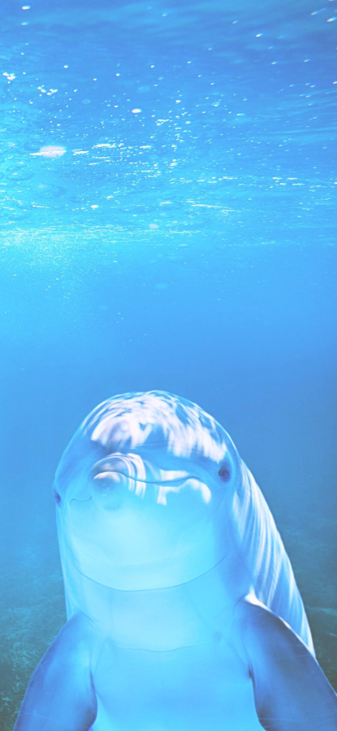 海の中の光とイルカ2