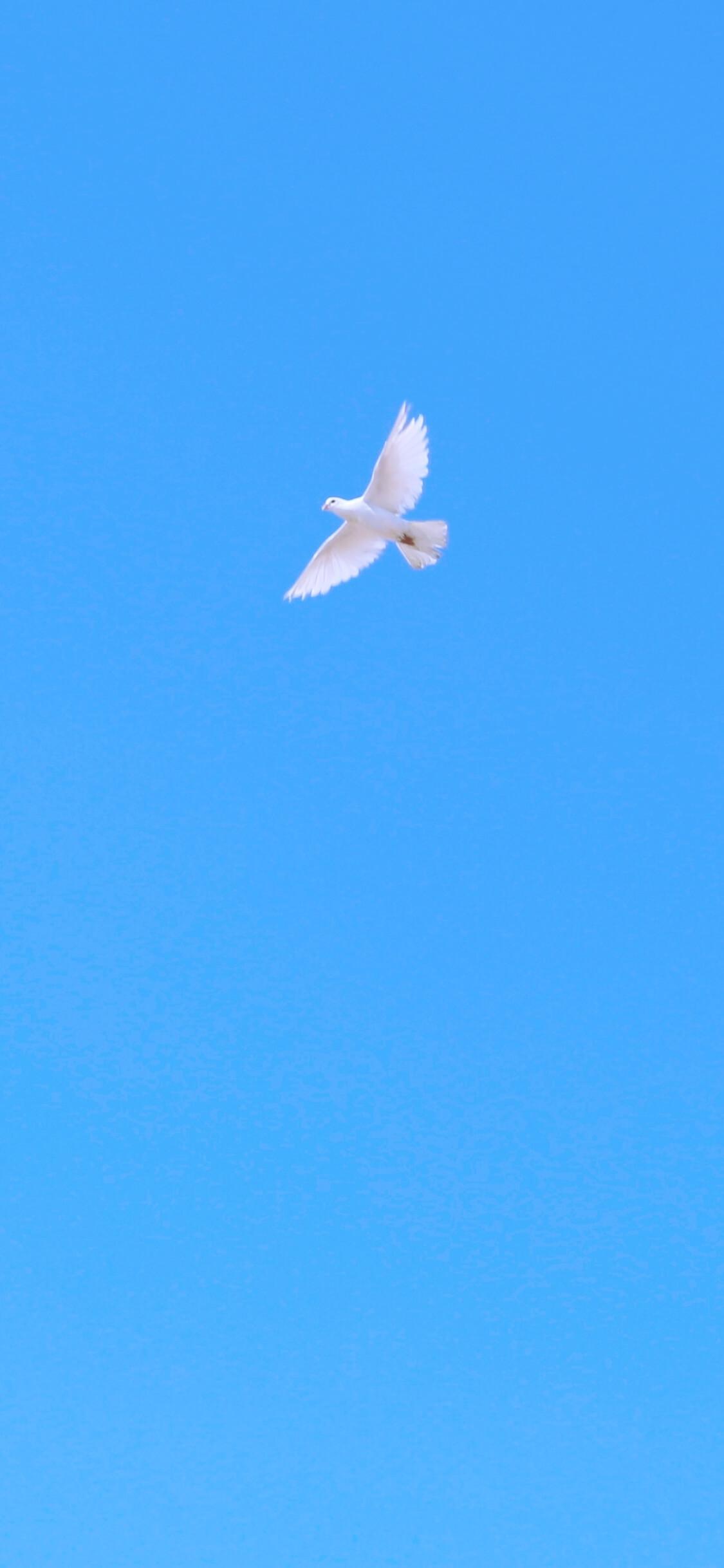 空を飛ぶ鳥2