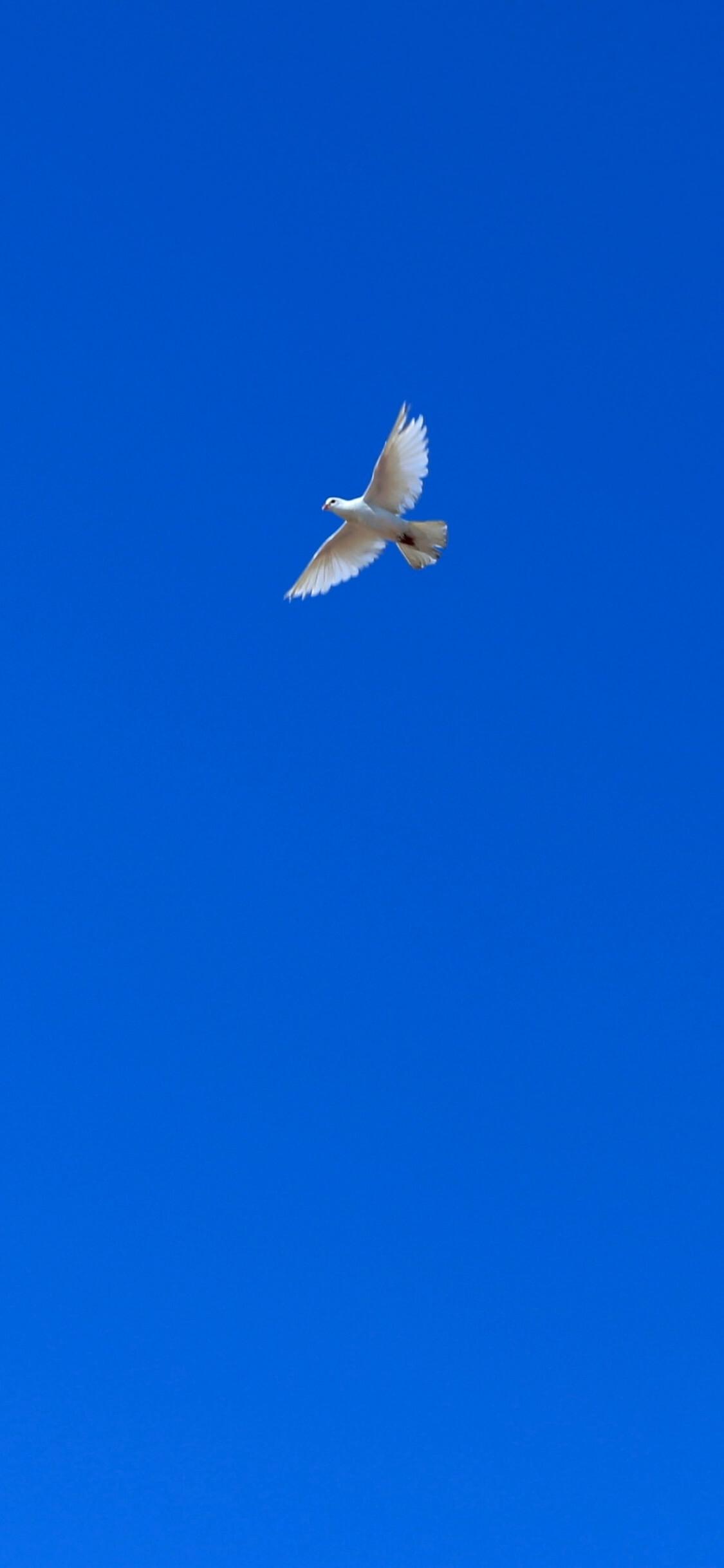 空を飛ぶ鳥1