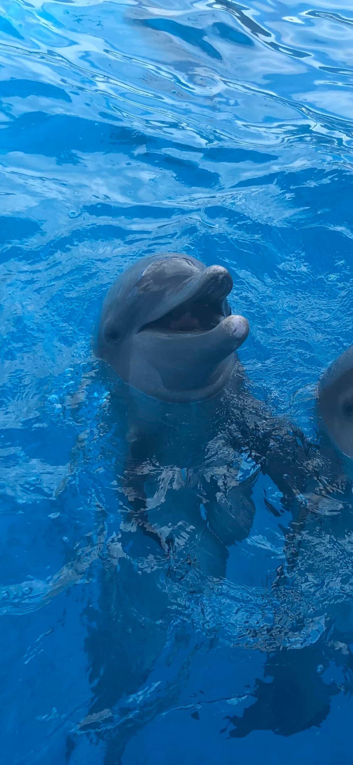 水面から顔を出してるイルカ1