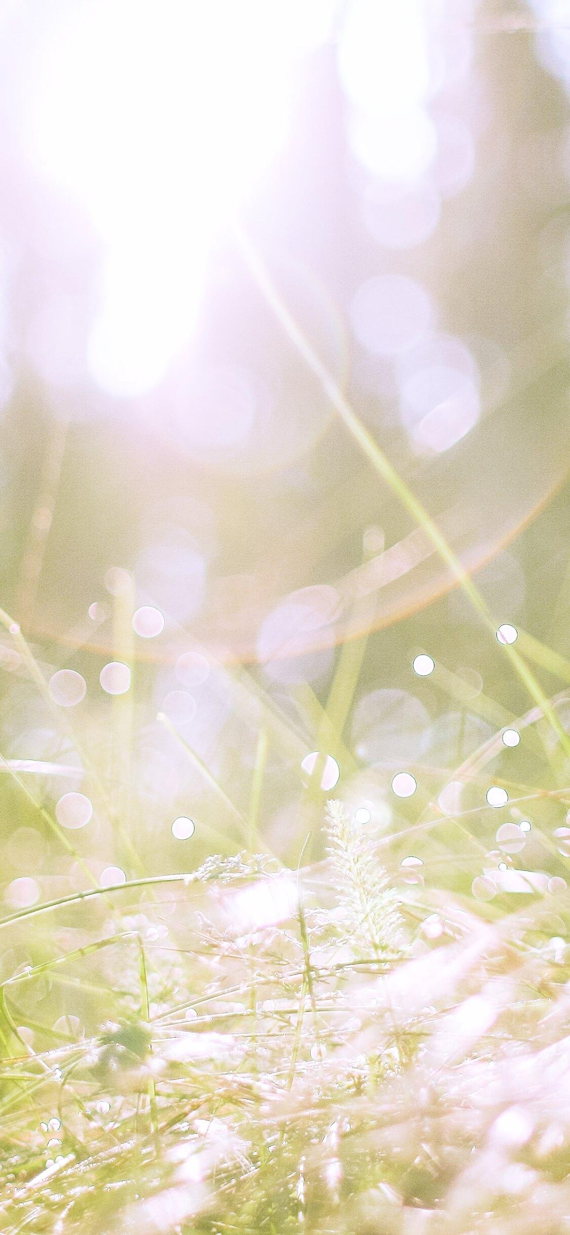 野原の日だまり2