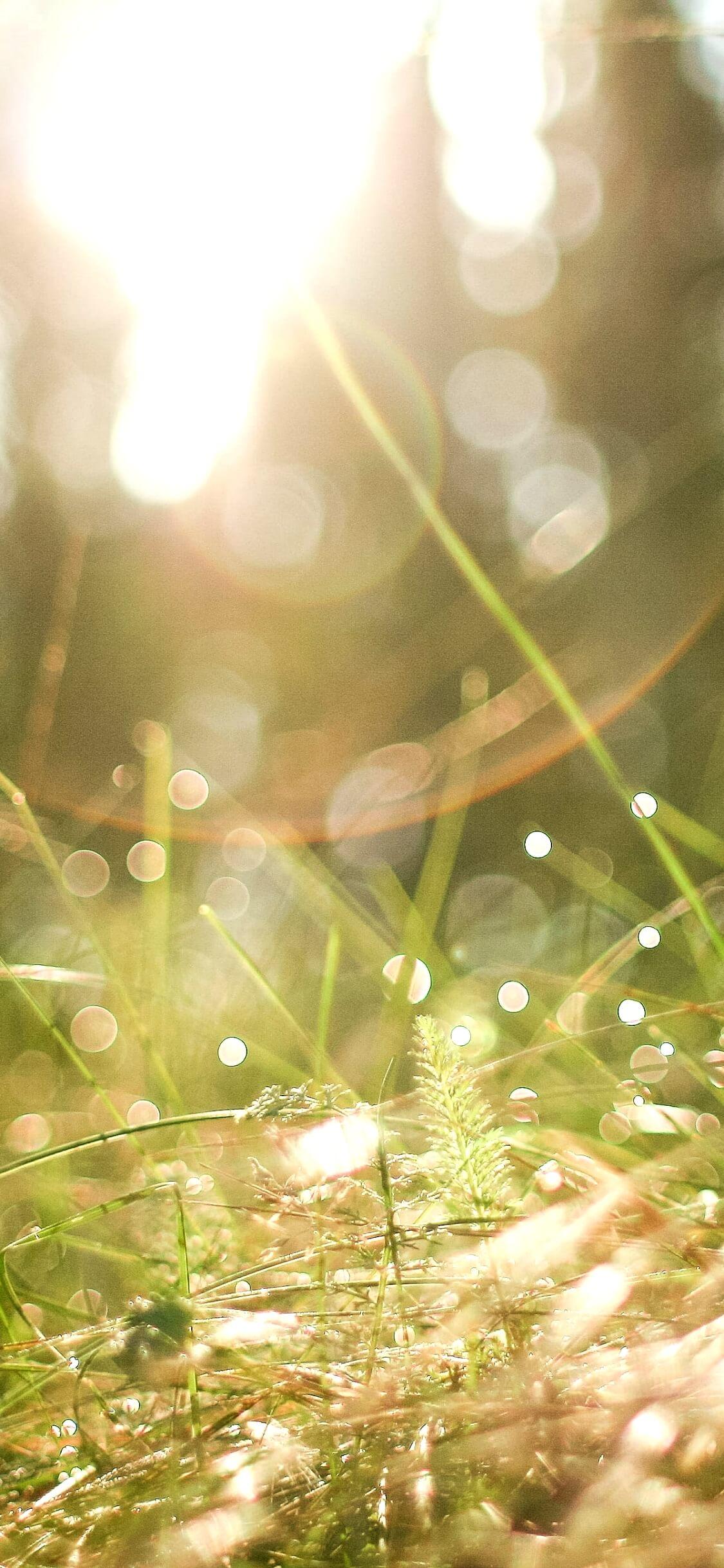 野原の日だまり1