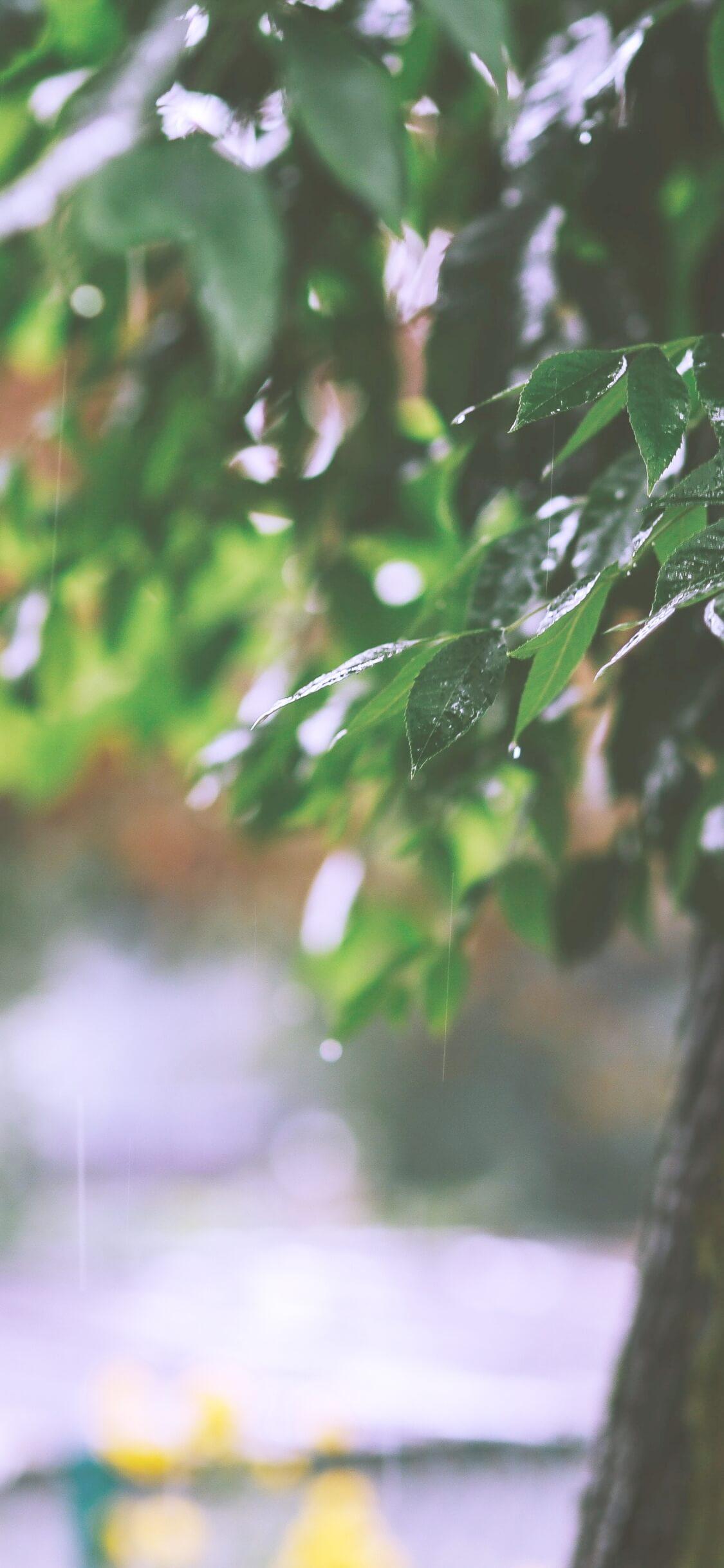春の雨と緑2