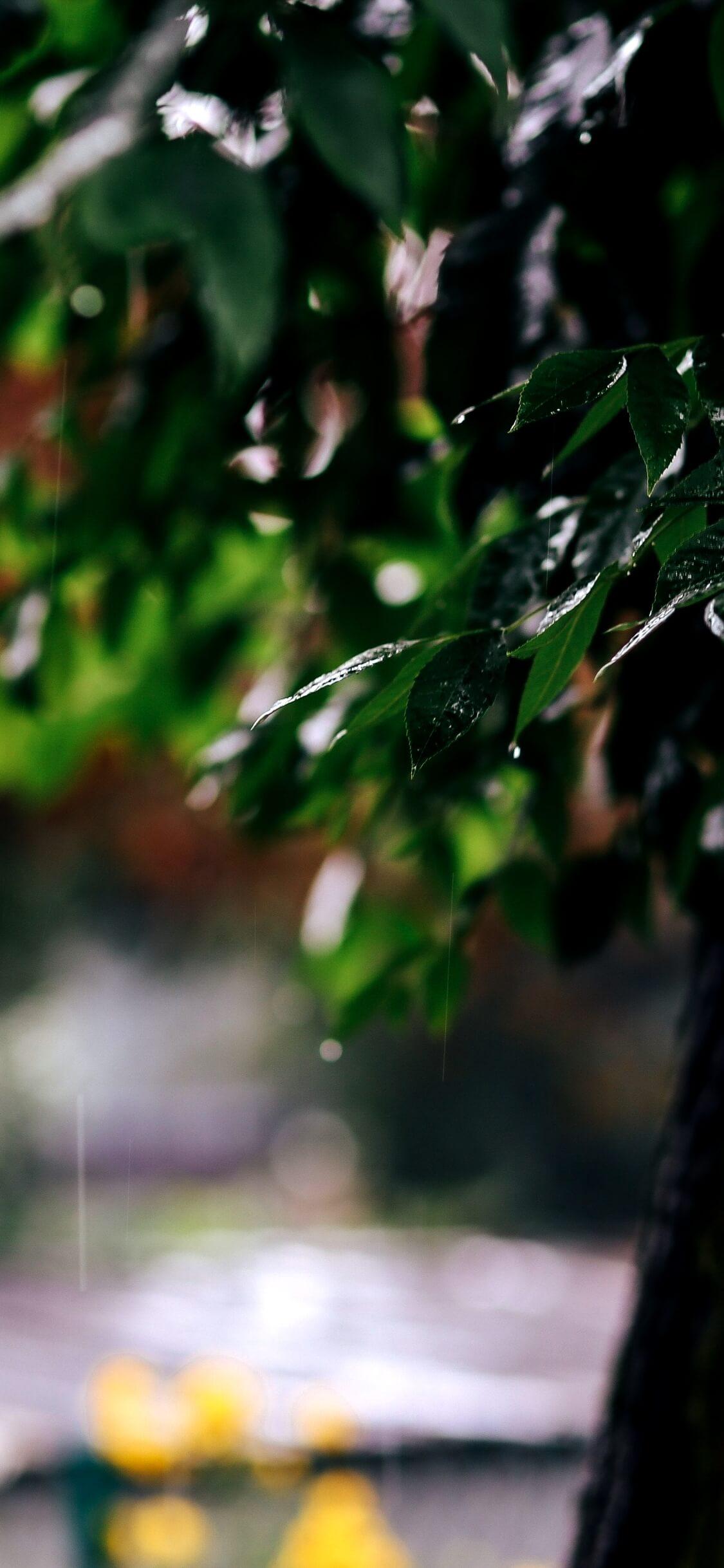 春の雨と緑1