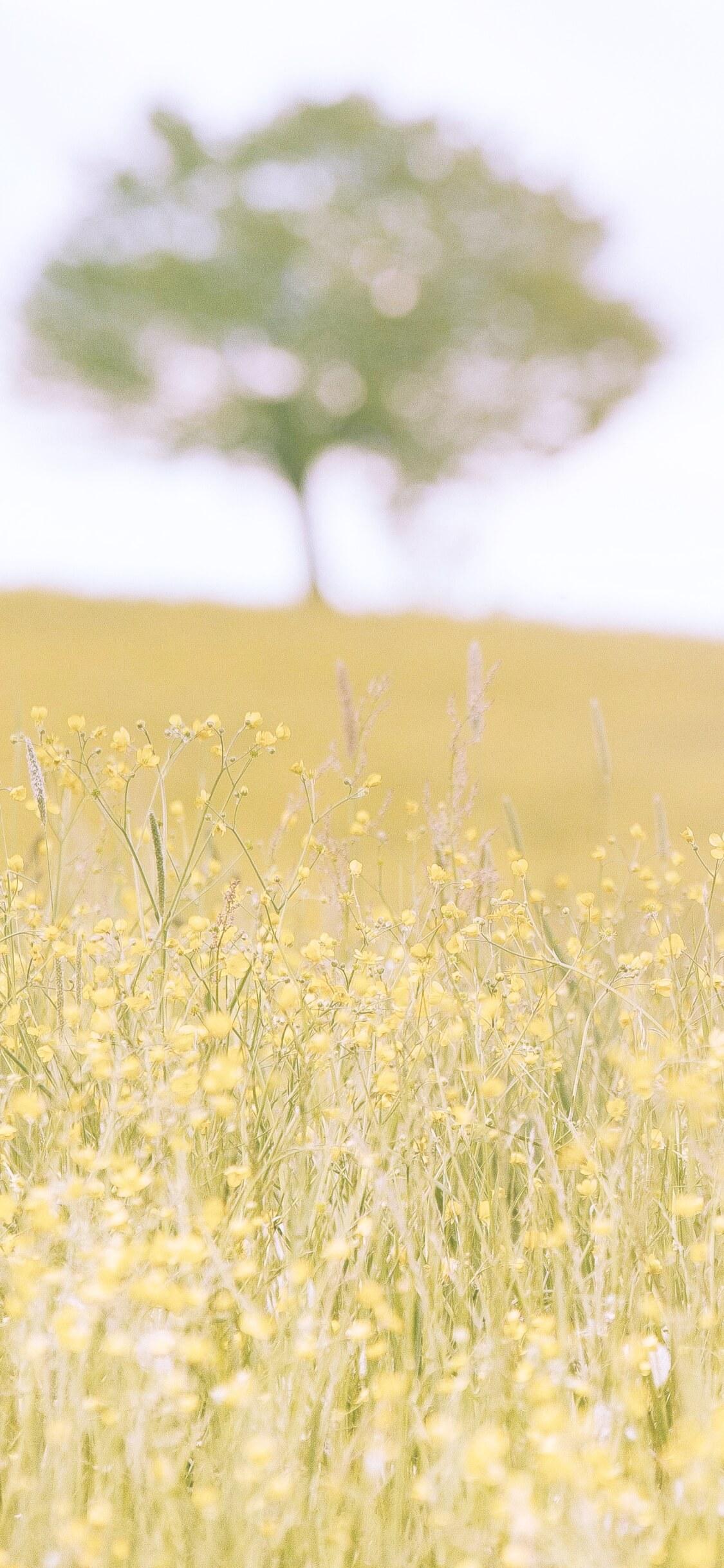 野原の花と木2