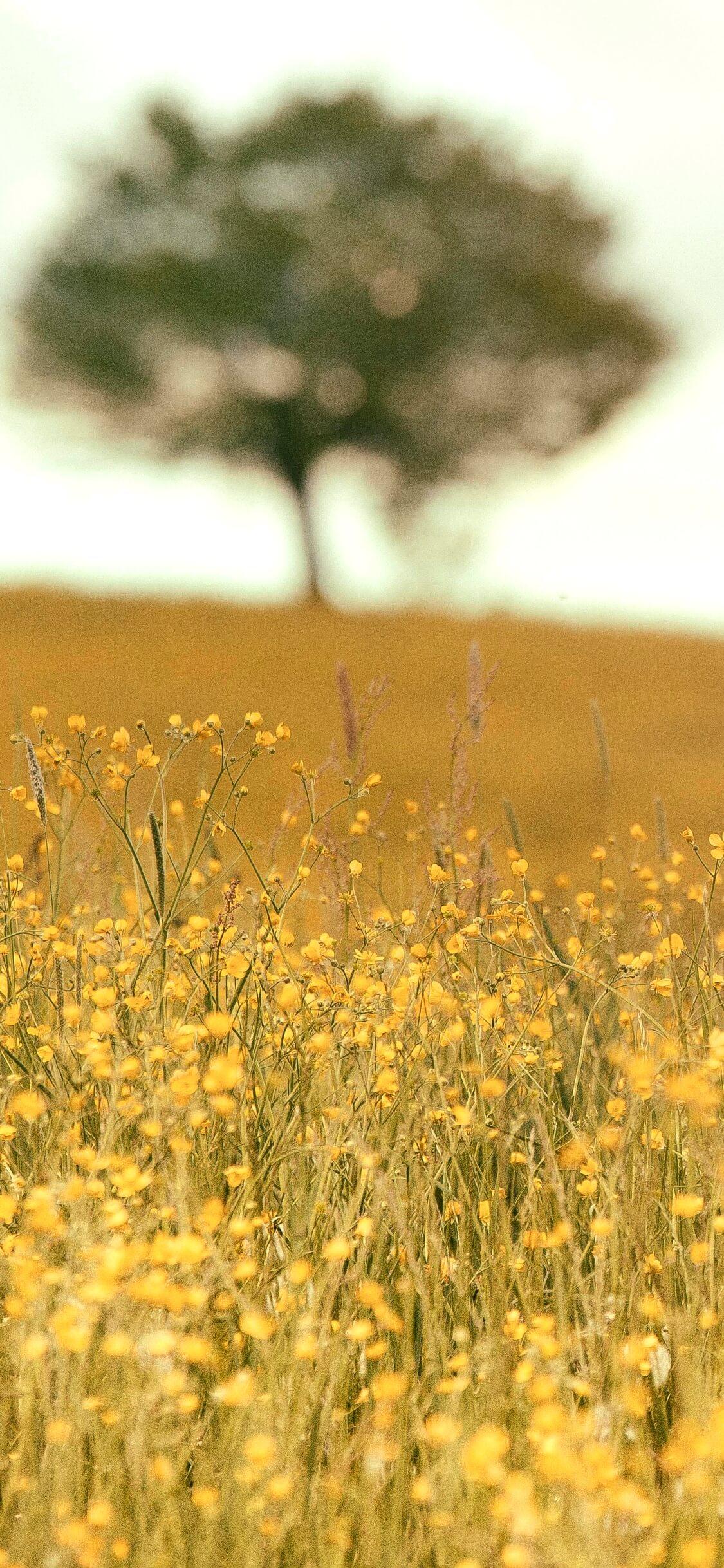 野原の花と木1