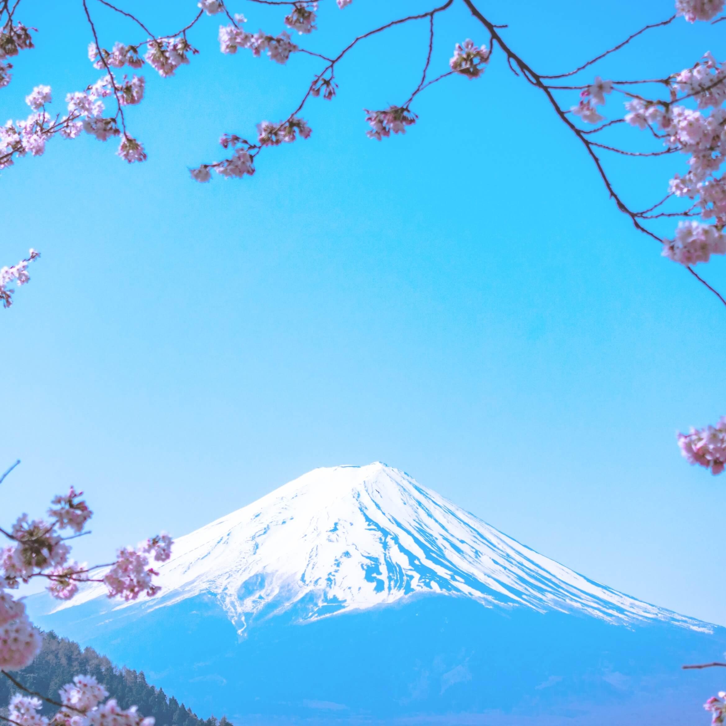 春の富士山2