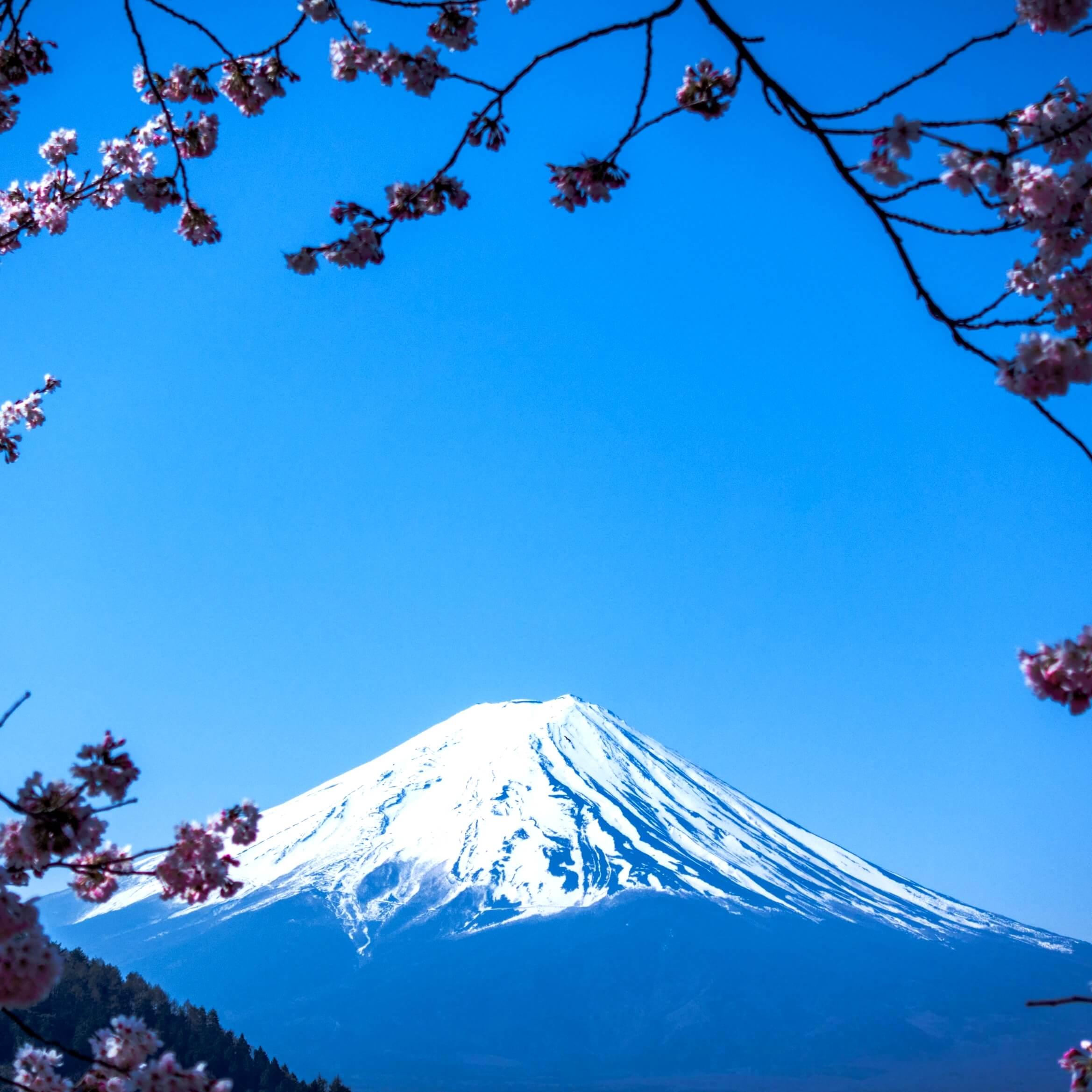 春の富士山1