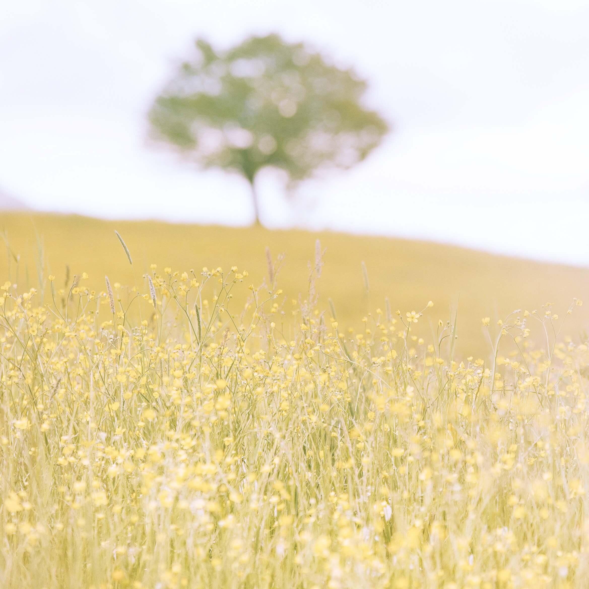 春の野原と木2