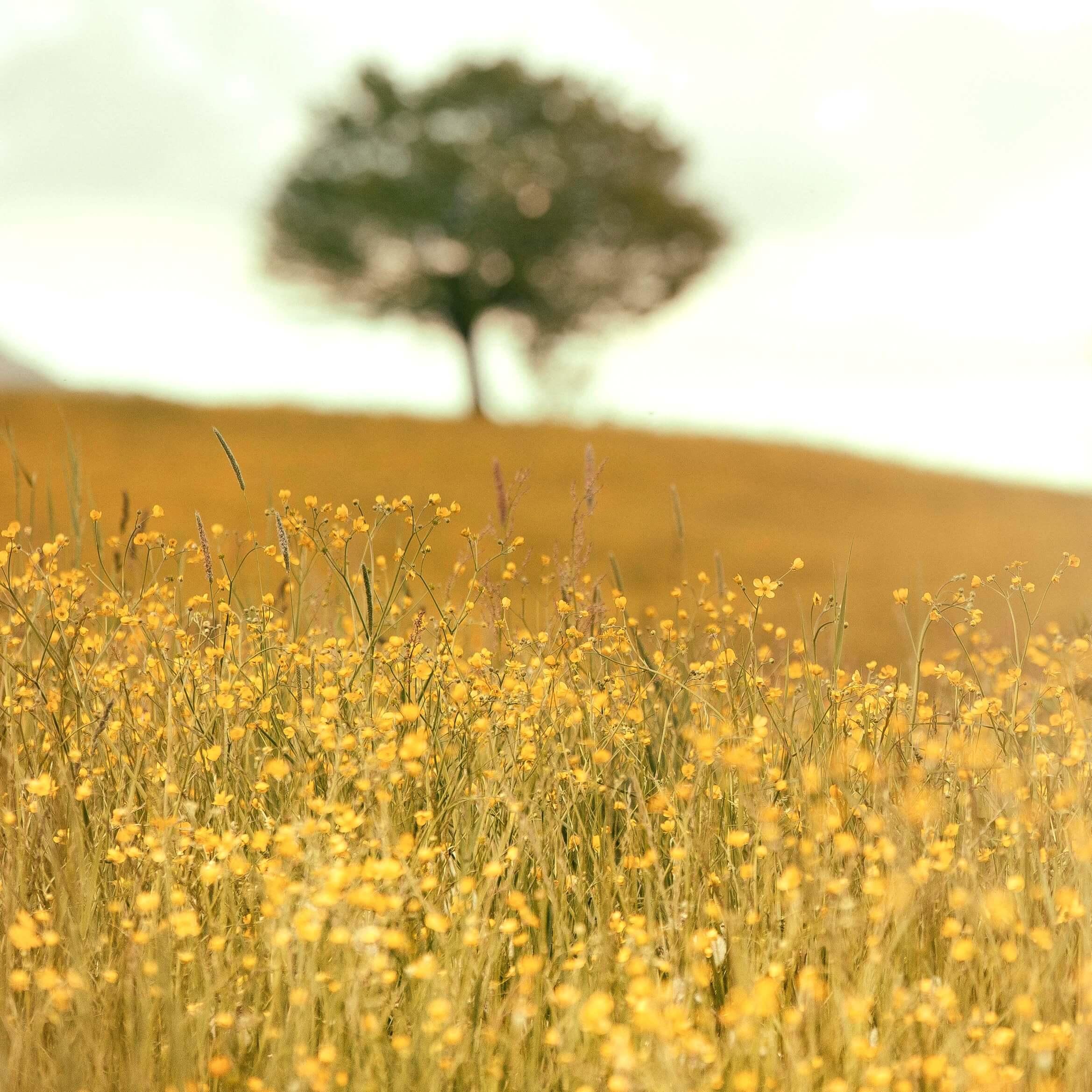 春の野原と木1
