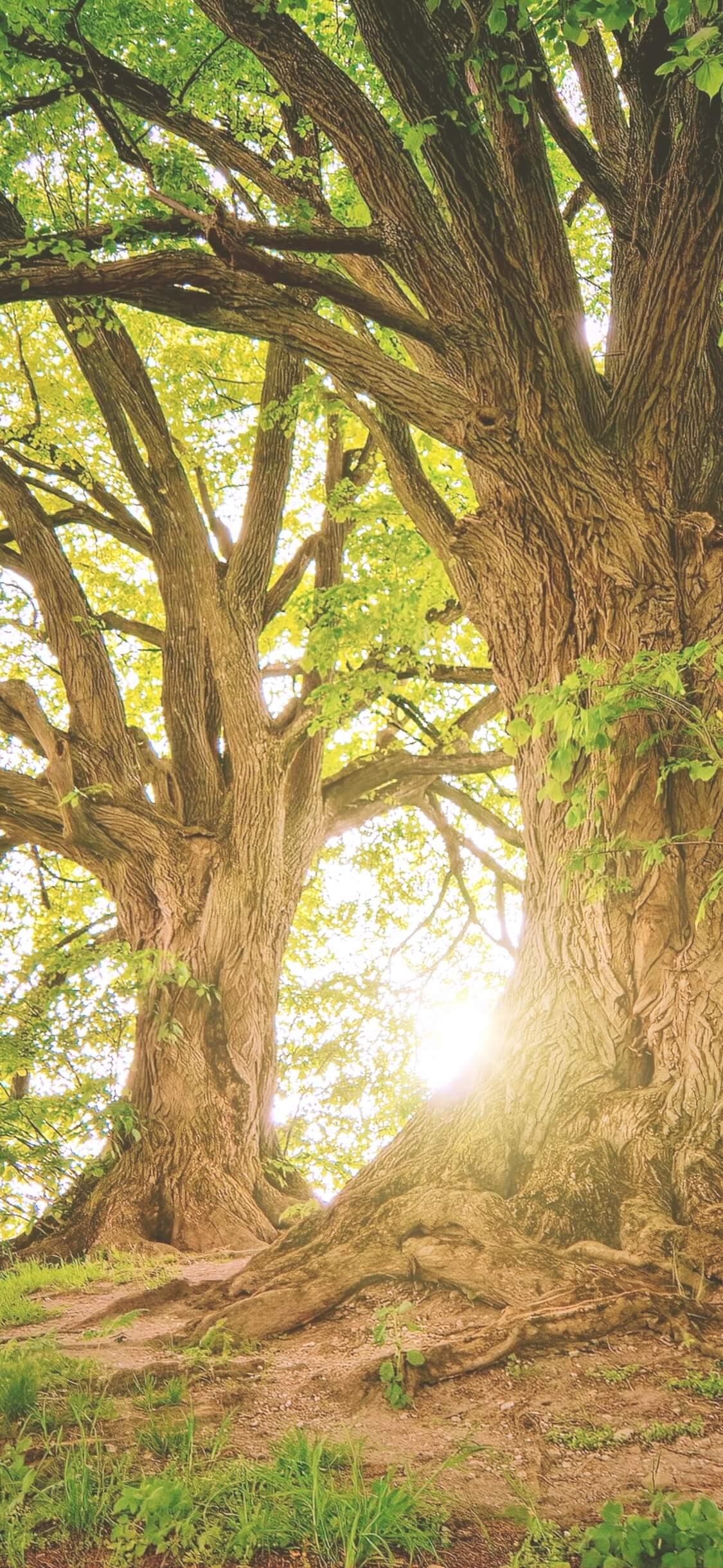 夏の日差しと木