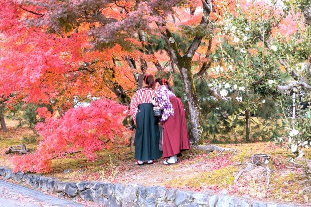 iPhone11ProMax・iPhoneXsMaxの日本の和の風景壁紙・待ち受け配信中
