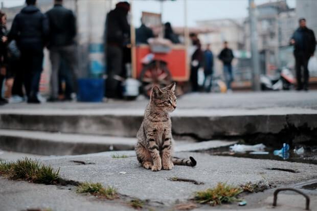 iPhone11・iPhoneXr猫や動物の無料壁紙・待受けイメージ画像