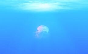 夏の海のくらげ