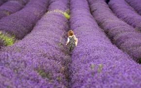 ラベンダー畑と小さい女の子