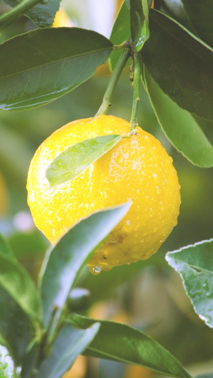 雨の日の果実