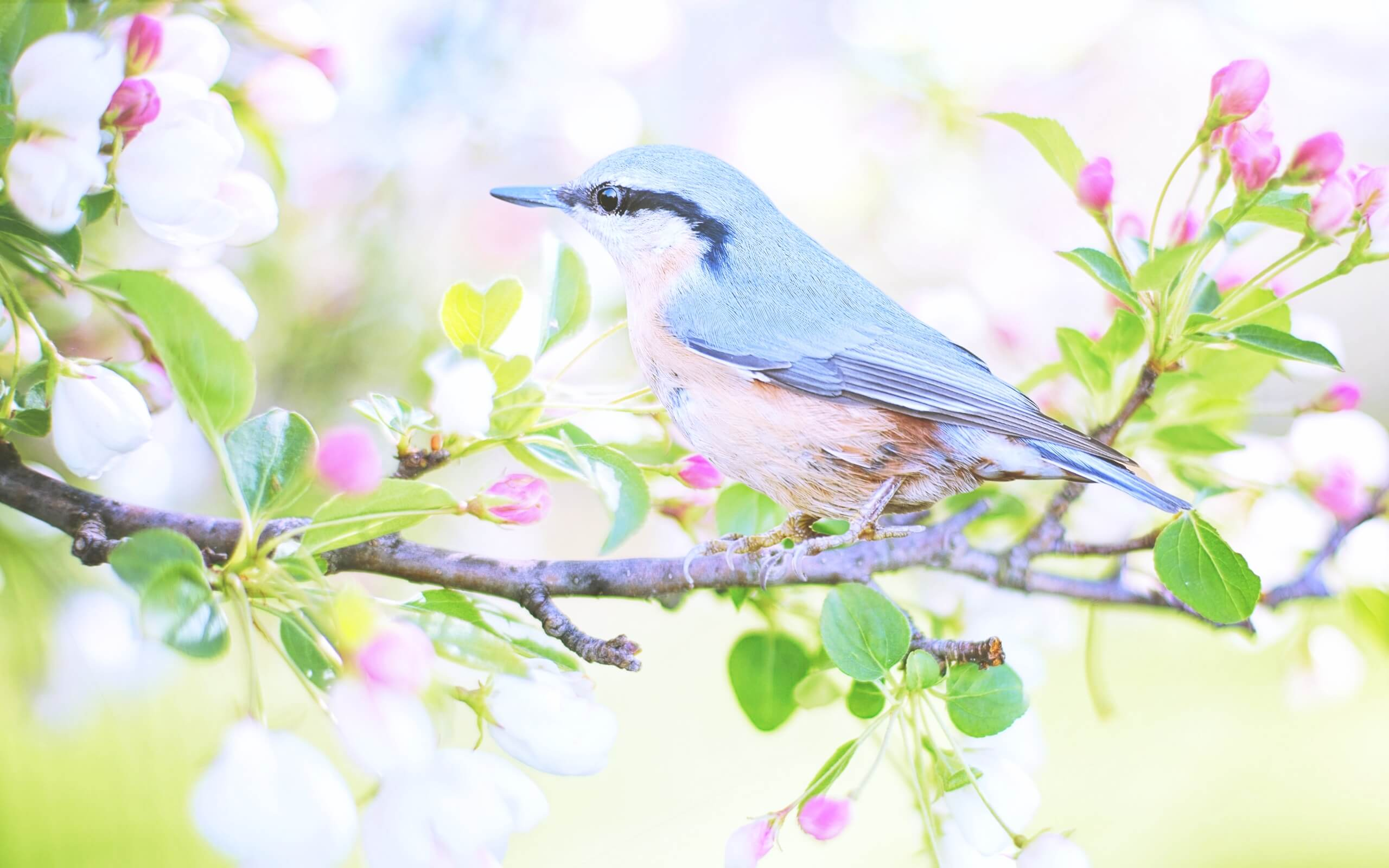 春の花と鳥2