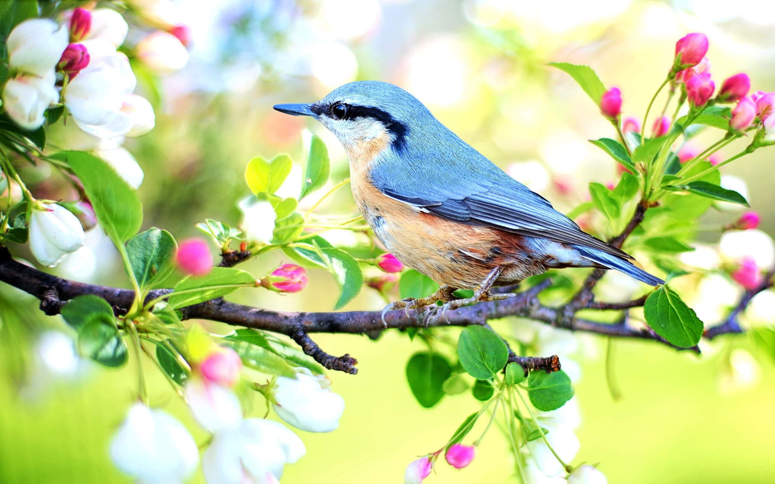 春の花と鳥1