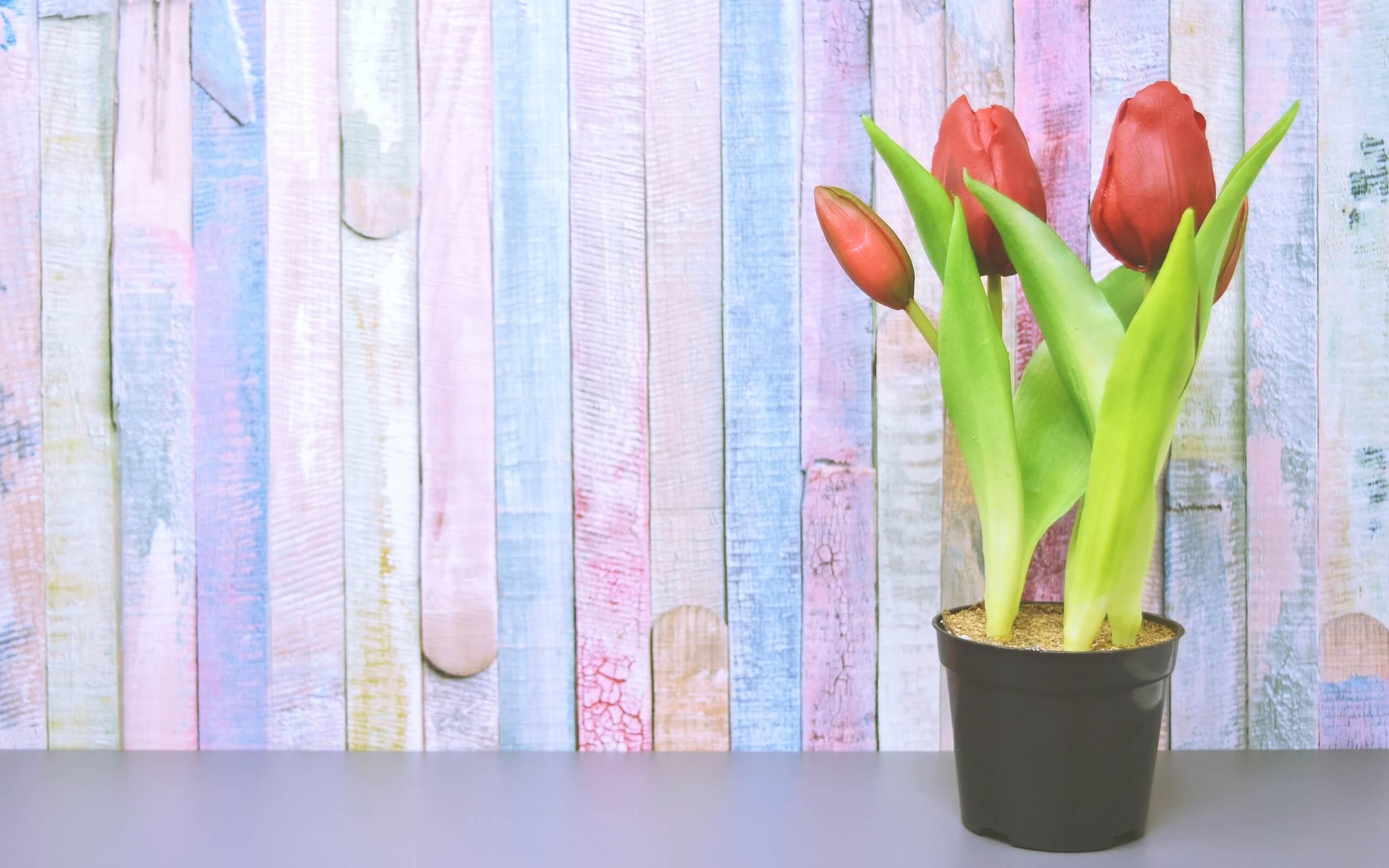 春色の壁とチューリップ2