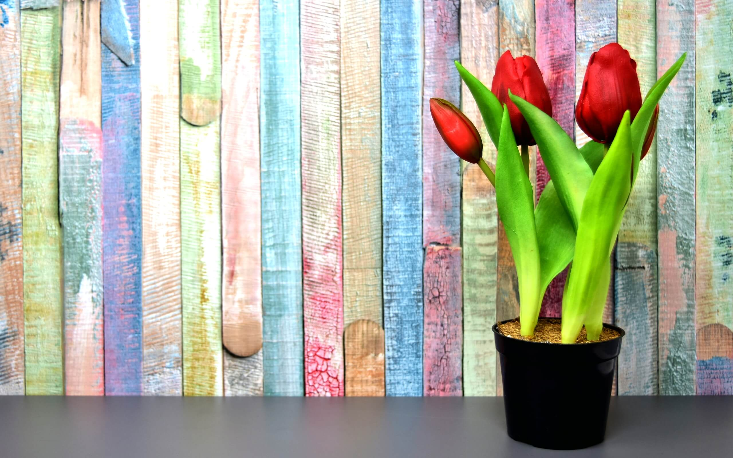 春色の壁とチューリップ1