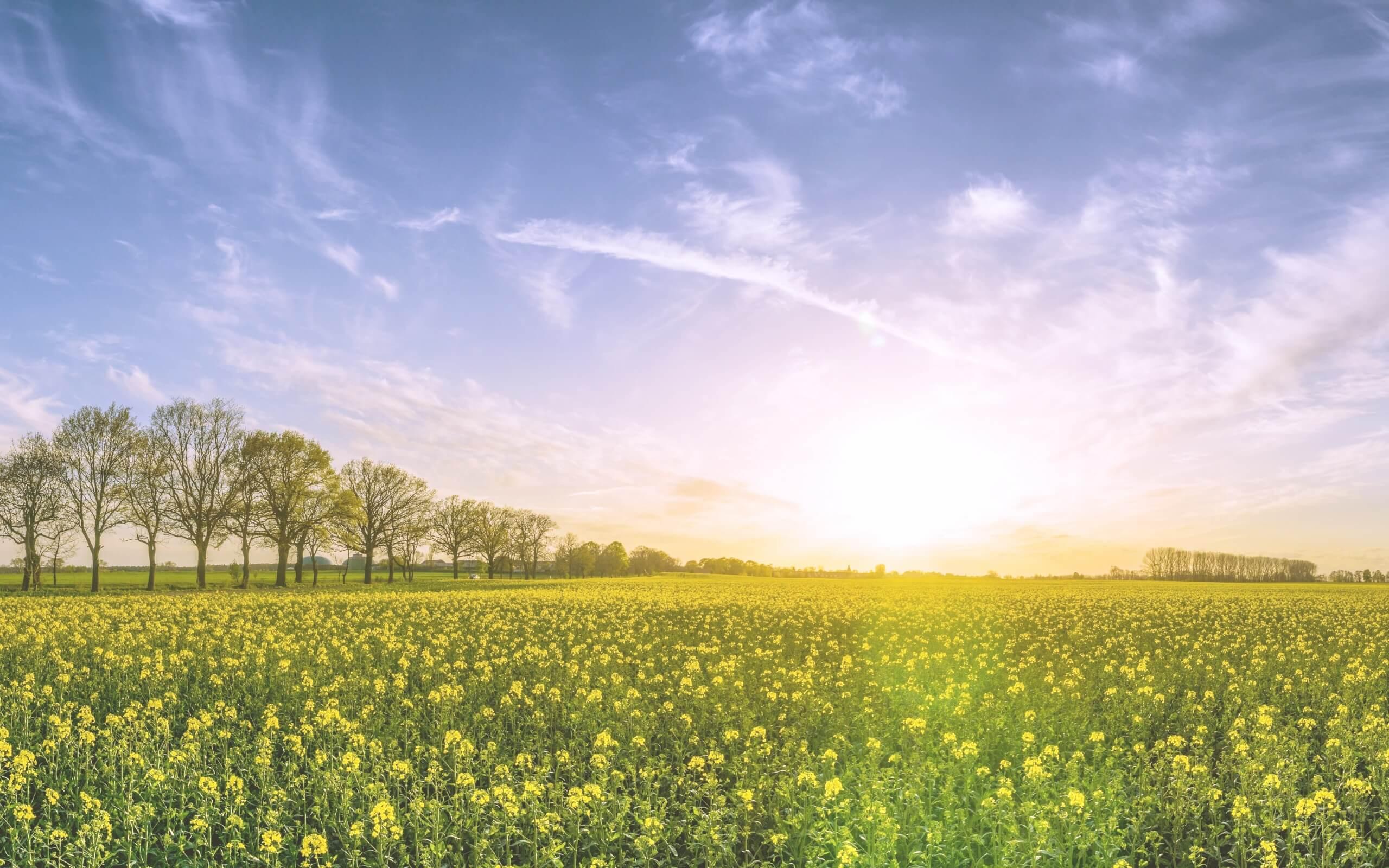 春の野原2
