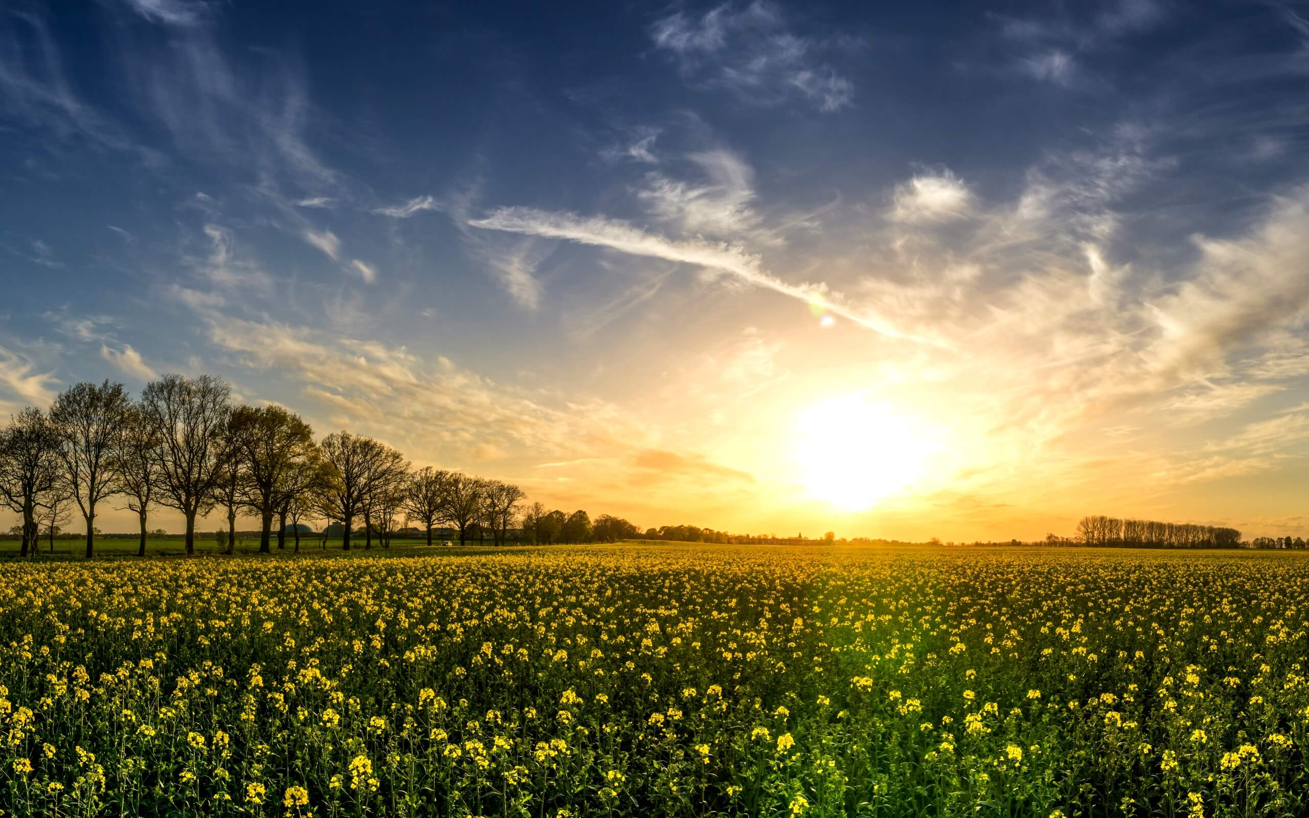 春の野原1