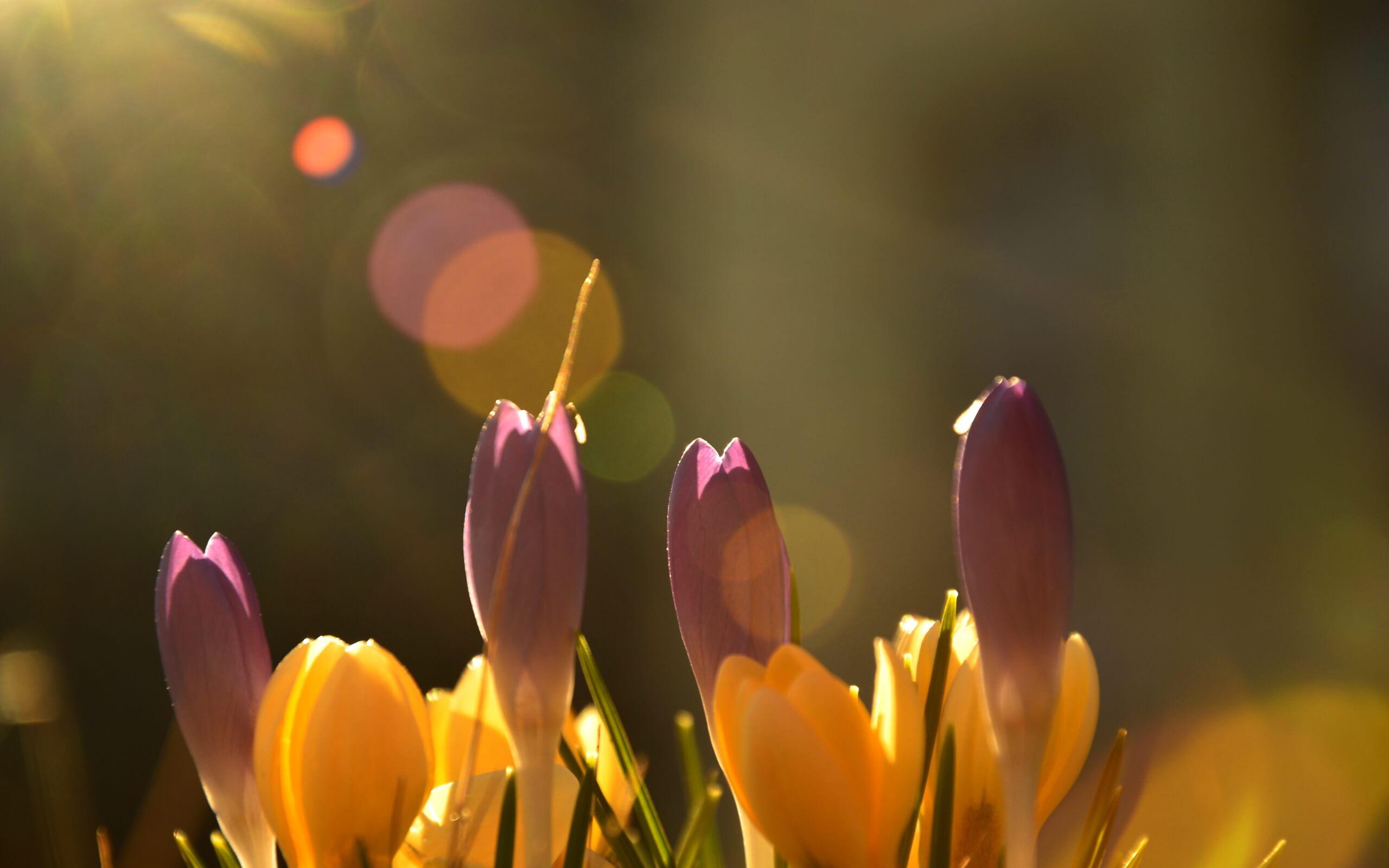 春の日だまりの花1
