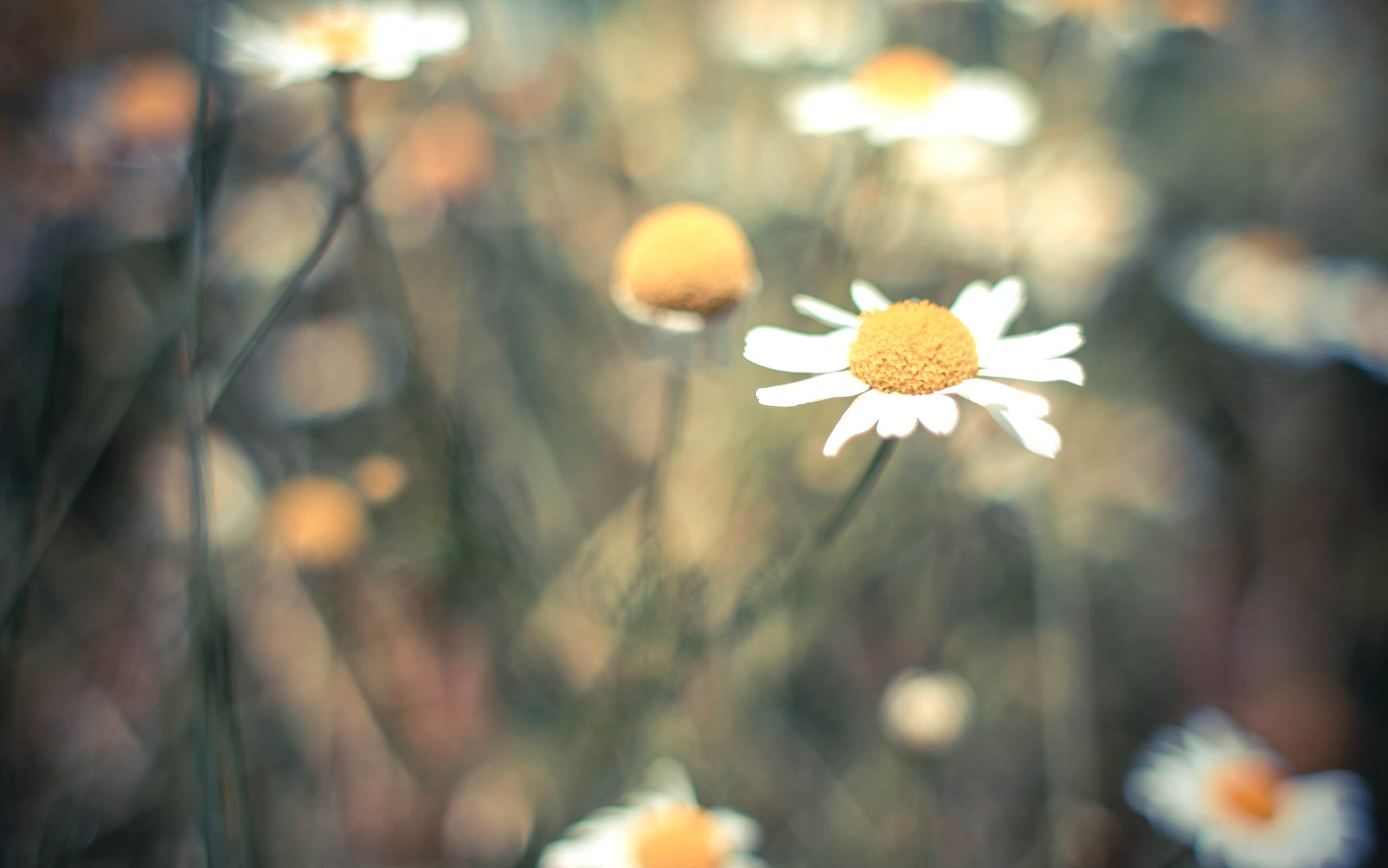 春の野の花1