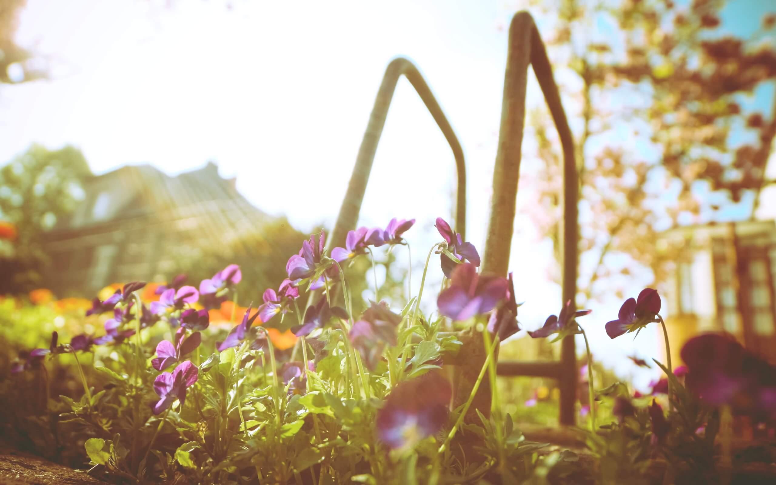 春の光と花2